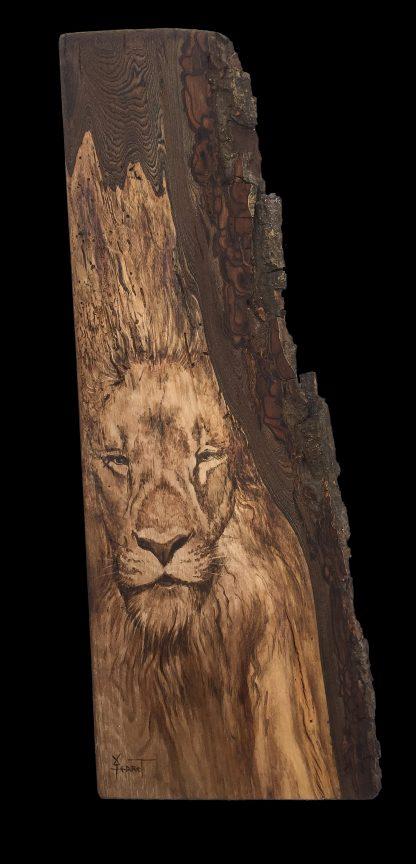 Lion de souche