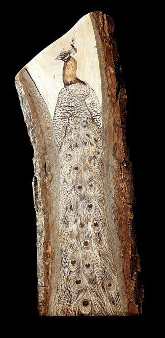 Paon de bois
